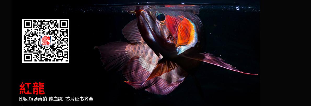 西安红龙鱼