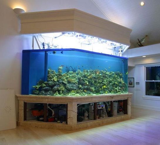 鱼缸风水 西安水族馆信息