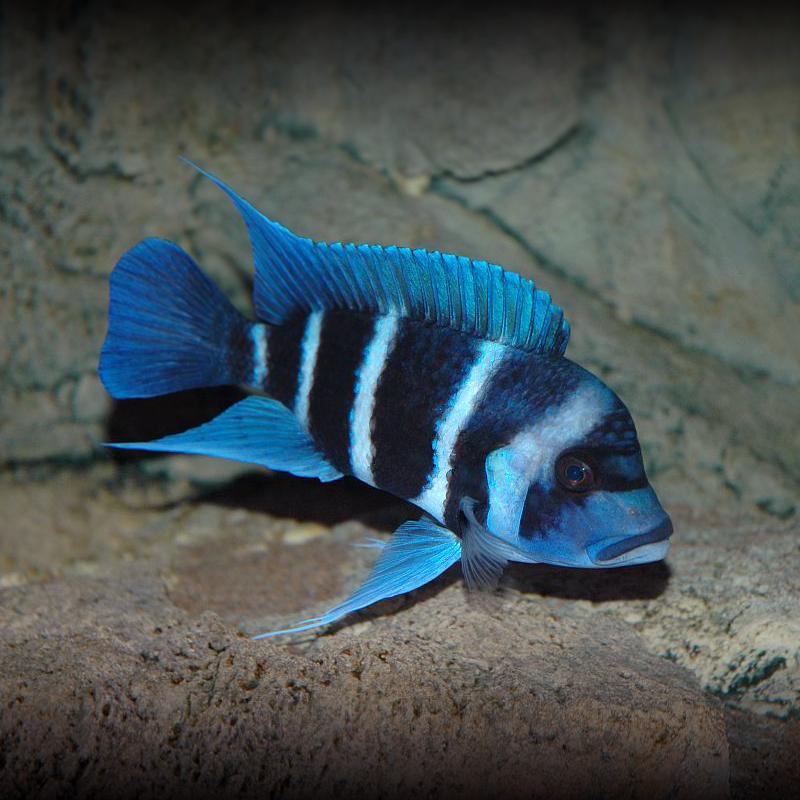 西安伊巴卡鱼