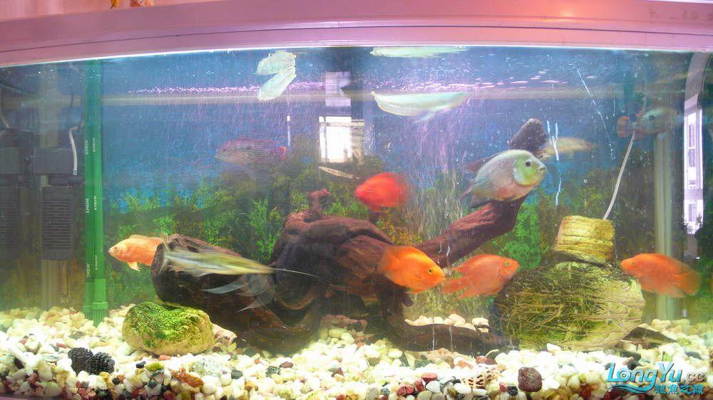 【西安最大花鸟市场】爱好的痛苦历程,我的养龙之路!!!写给所有的爱龙和鱼商 西安观赏鱼信息 西安博特第4张