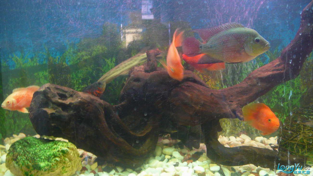 【西安最大花鸟市场】爱好的痛苦历程,我的养龙之路!!!写给所有的爱龙和鱼商 西安观赏鱼信息 西安博特第8张
