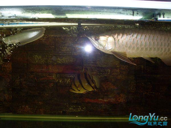 【西安最大花鸟鱼市在哪】是不是危险太大了 ?! 西安观赏鱼信息 西安博特第1张