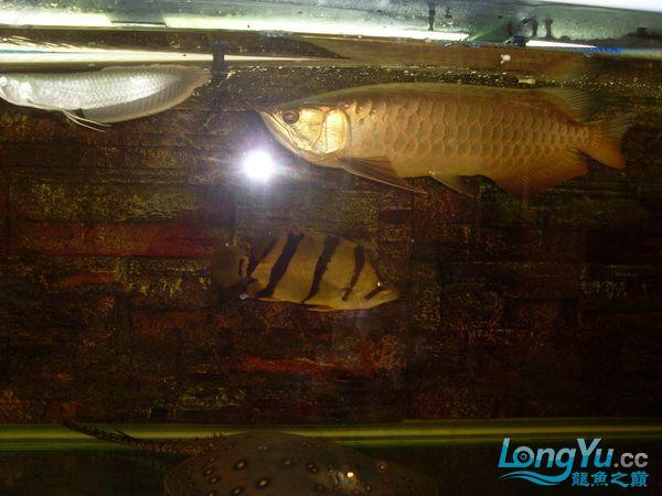 【西安最大花鸟鱼市在哪】是不是危险太大了 ?! 西安观赏鱼信息 西安博特第2张