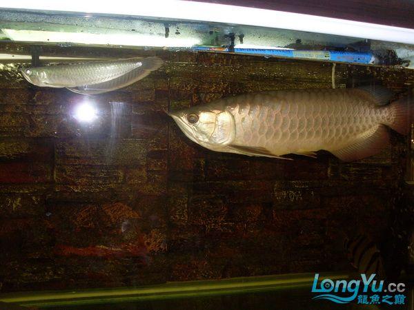 【西安最大花鸟鱼市在哪】是不是危险太大了 ?! 西安观赏鱼信息 西安博特第5张