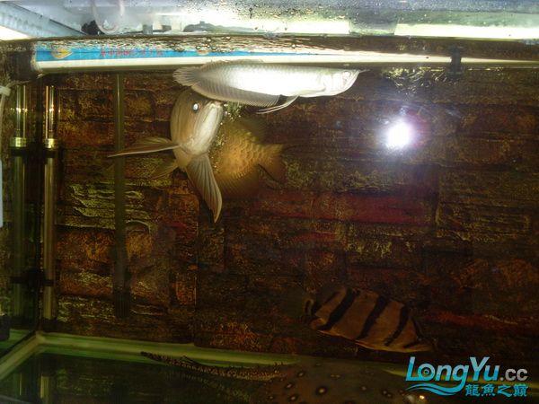 【西安最大花鸟鱼市在哪】是不是危险太大了 ?! 西安观赏鱼信息 西安博特第4张