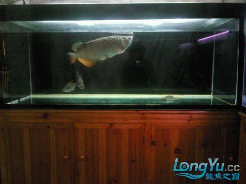 【西安水族市场在哪里】有谁知道我鱼缸的设计 西安观赏鱼信息 西安博特第1张