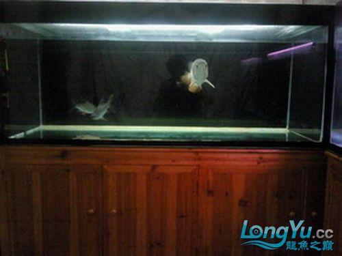 【西安水族市场在哪里】有谁知道我鱼缸的设计 西安观赏鱼信息 西安博特第2张