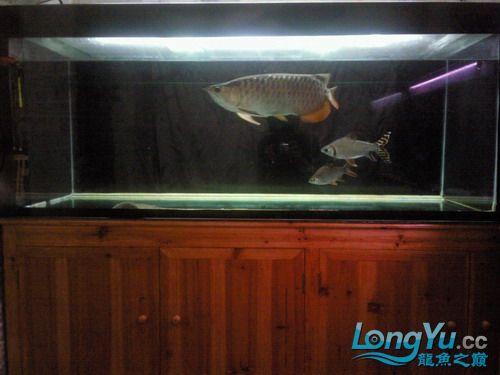 【西安水族市场在哪里】有谁知道我鱼缸的设计 西安观赏鱼信息 西安博特第3张