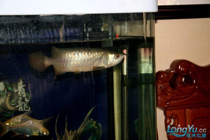 到家十多天了,看看状态怎么样 西安观赏鱼信息 西安博特第3张