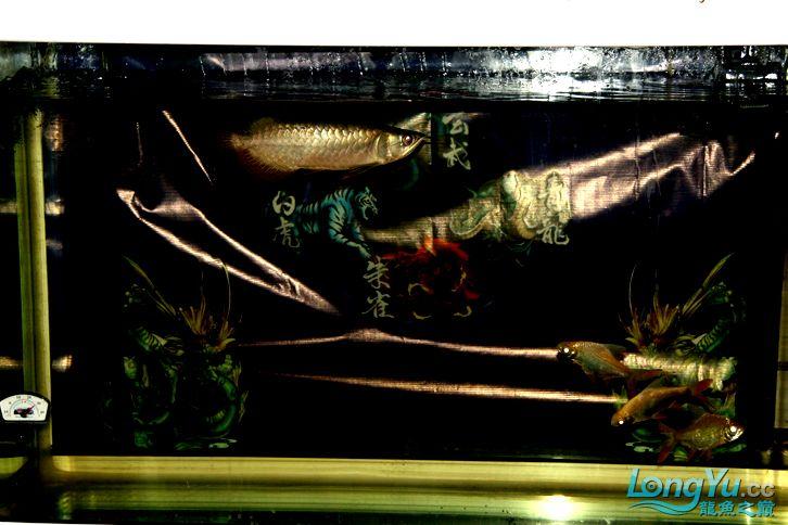 到家十多天了,看看状态怎么样 西安观赏鱼信息 西安博特第4张