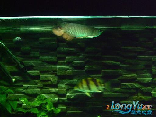 新请得虎 西安观赏鱼信息 西安博特第4张