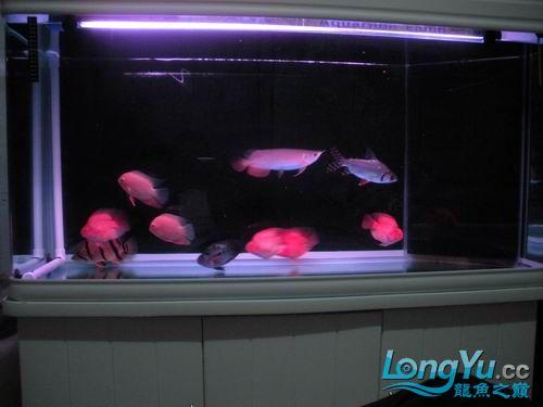 各位高手来看【西安鱼缸清洗】看我的宝石 西安观赏鱼信息 西安博特第5张