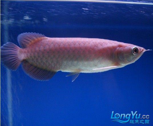 看看这是什么寄生虫【陕西博特总代】 西安观赏鱼信息 西安博特第3张