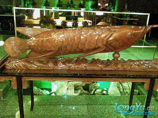 高手的大龙鱼玩家 西安观赏鱼信息 西安博特第4张