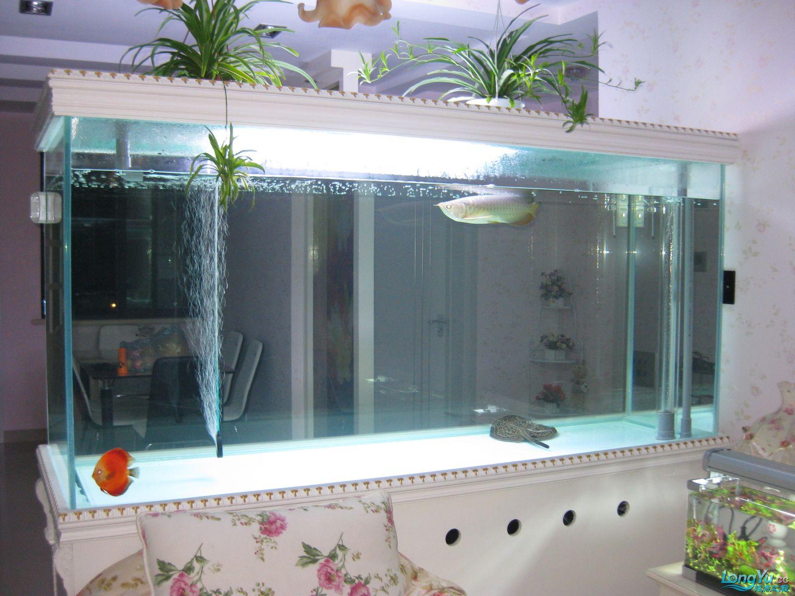 欧式超白玻璃鱼缸设计图纸200X70X100 西安观赏鱼信息 西安博特第11张