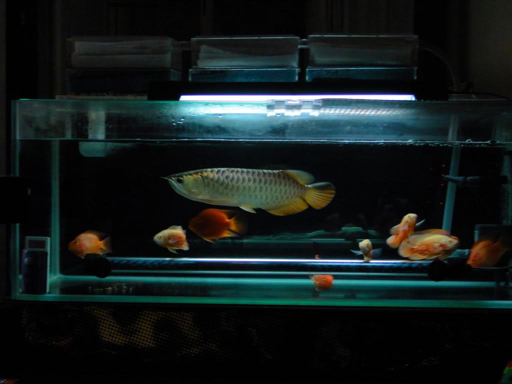 HI【西安鱼缸过滤】... 西安观赏鱼信息