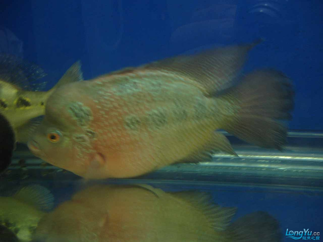 【西安鱼缸过滤】看看我的鱼(三) 西安观赏鱼信息