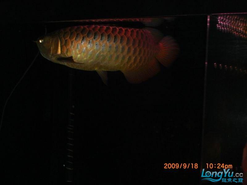 家中老过背,露下脸 西安观赏鱼信息 西安博特第6张