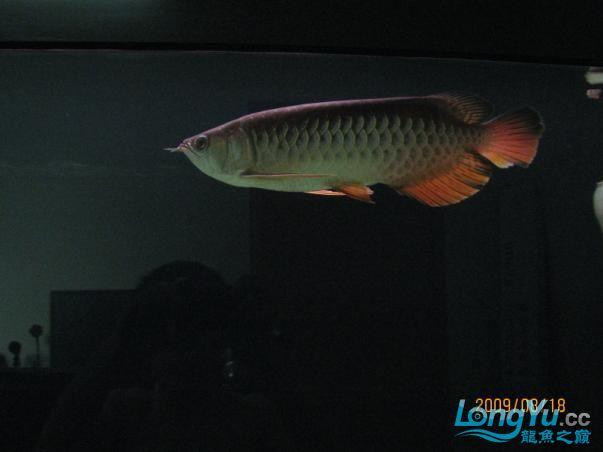 受伤后没有发过.恢复中的小宝【西安鱼市在哪】,,, 西安观赏鱼信息 西安博特第6张