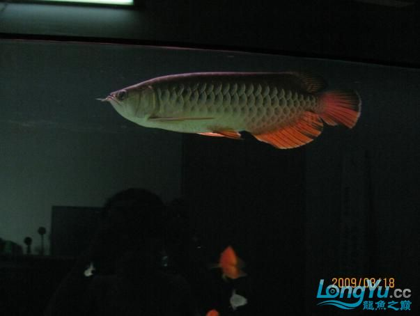 受伤后没有发过.恢复中的小宝【西安鱼市在哪】,,, 西安观赏鱼信息 西安博特第7张