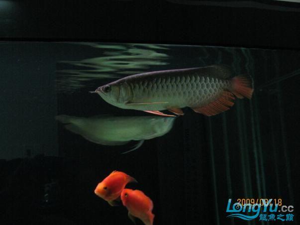 受伤后没有发过.恢复中的小宝【西安鱼市在哪】,,, 西安观赏鱼信息 西安博特第8张