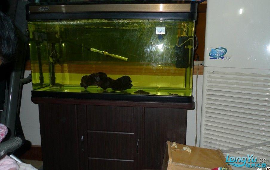 这1.2米的缸 能不能改成底部过滤???? 西安观赏鱼信息