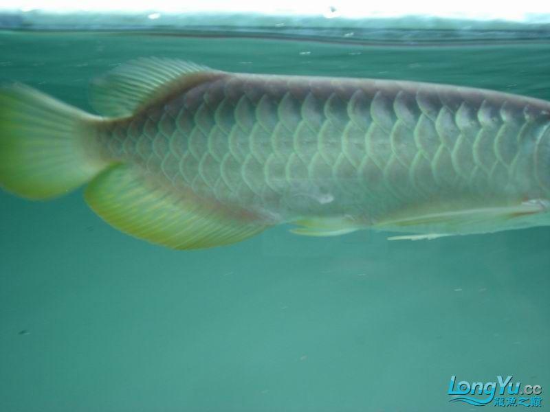 龙龙到家40天了。。拍照纪念。。。 西安观赏鱼信息 西安博特第11张