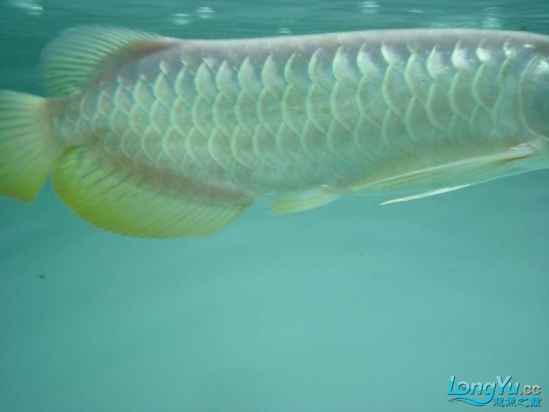 龙龙到家40天了。。拍照纪念。。。 西安观赏鱼信息 西安博特第14张