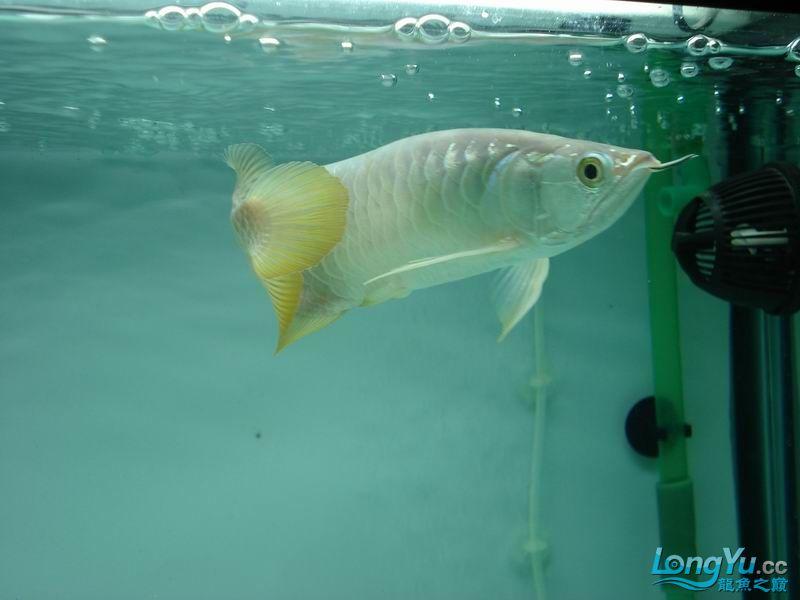 龙龙到家40天了。。拍照纪念。。。 西安观赏鱼信息 西安博特第16张