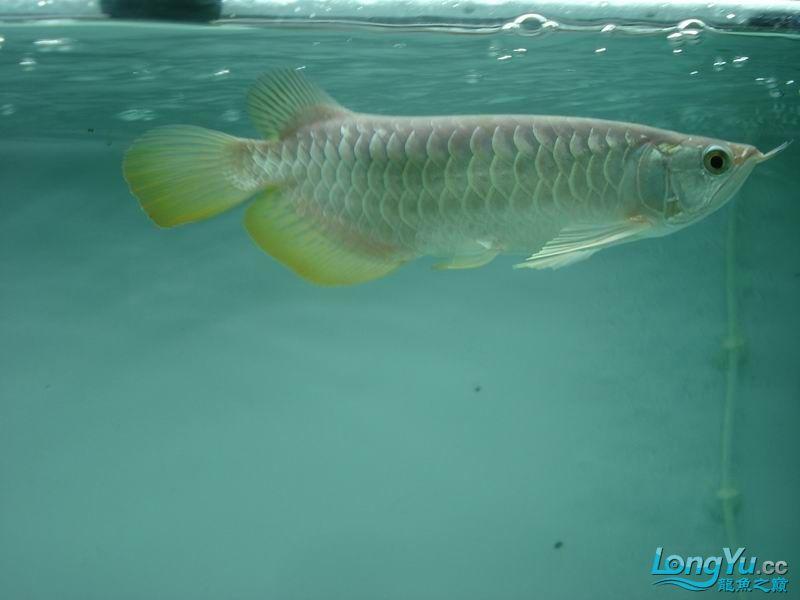 龙龙到家40天了。。拍照纪念。。。 西安观赏鱼信息 西安博特第17张
