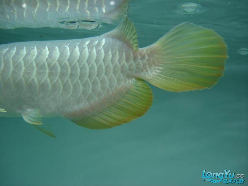 龙龙到家40天了。。拍照纪念。。。 西安观赏鱼信息 西安博特第22张