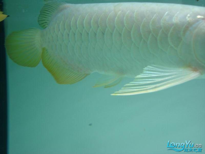 龙龙到家40天了。。拍照纪念。。。 西安观赏鱼信息 西安博特第29张