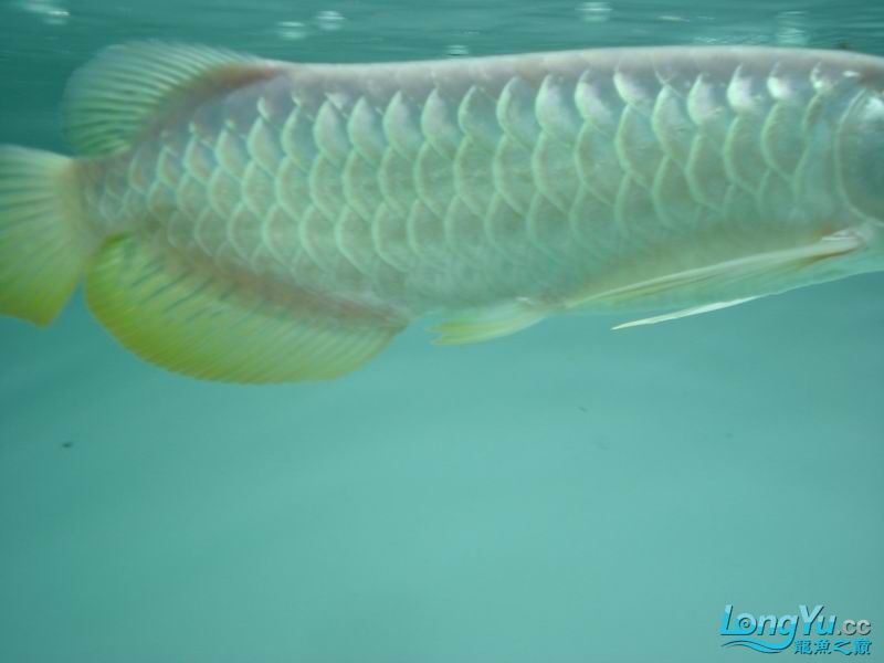 龙龙到家40天了。。拍照纪念。。。 西安观赏鱼信息 西安博特第36张