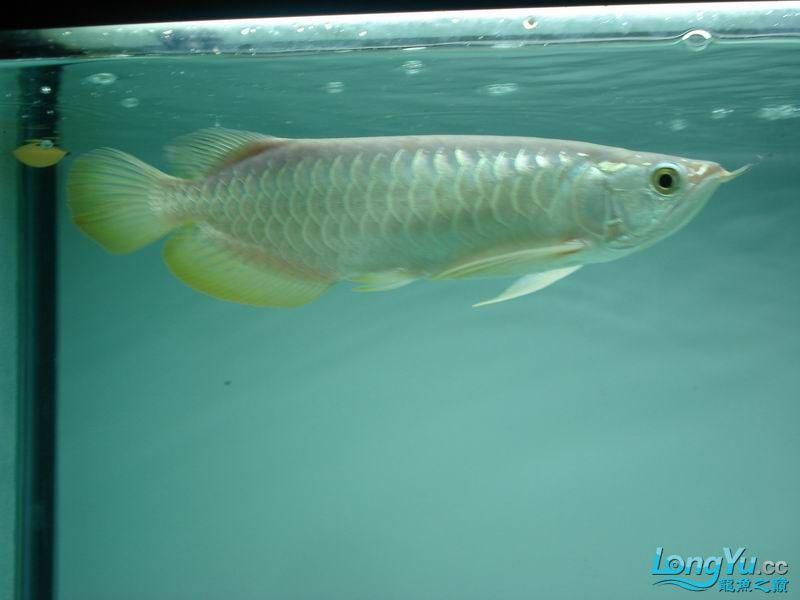 龙龙到家40天了。。拍照纪念。。。 西安观赏鱼信息 西安博特第48张