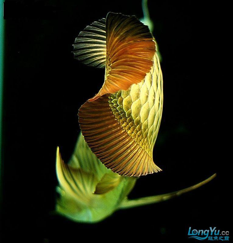 它们如此的美丽,如此迷人!(怕中毒者勿入)