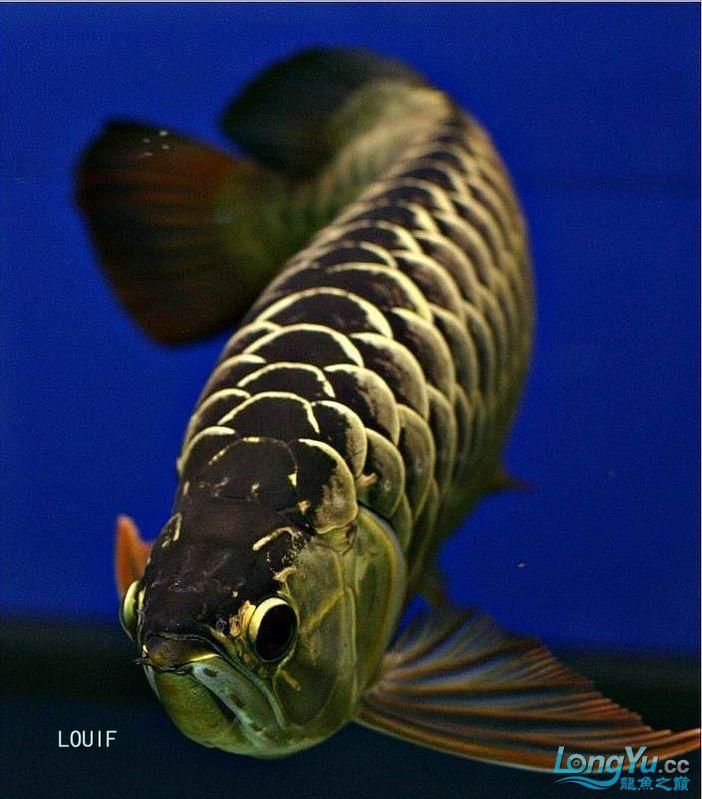 它们如此的美丽,如此迷人!(怕中毒者勿入) 西安观赏鱼信息 西安博特第3张