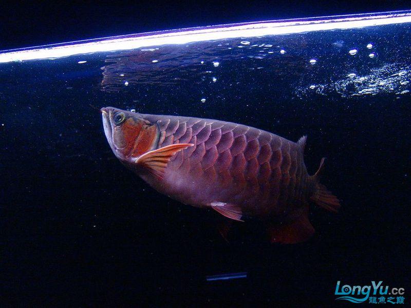 它们如此的美丽,如此迷人!(怕中毒者勿入) 西安观赏鱼信息 西安博特第4张