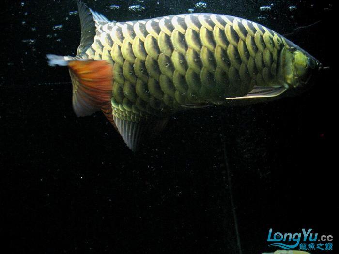 它们如此的美丽,如此迷人!(怕中毒者勿入) 西安观赏鱼信息 西安博特第8张