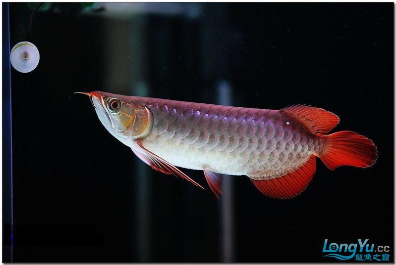 它们如此的美丽,如此迷人!(怕中毒者勿入) 西安观赏鱼信息 西安博特第7张