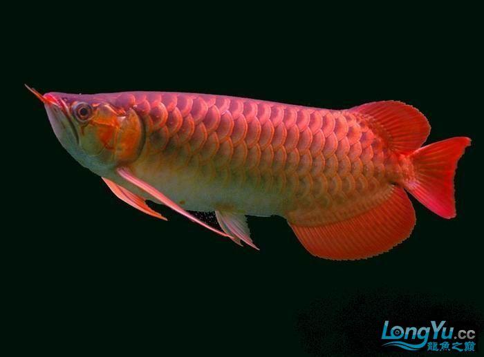 它们如此的美丽,如此迷人!(怕中毒者勿入) 西安观赏鱼信息 西安博特第9张