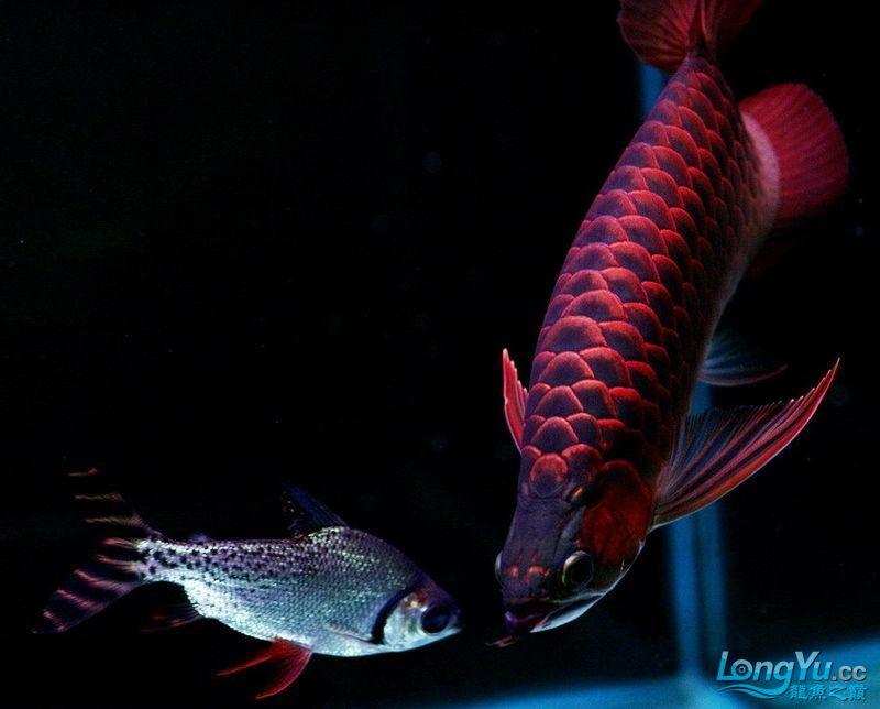 它们如此的美丽,如此迷人!(怕中毒者勿入) 西安观赏鱼信息 西安博特第10张