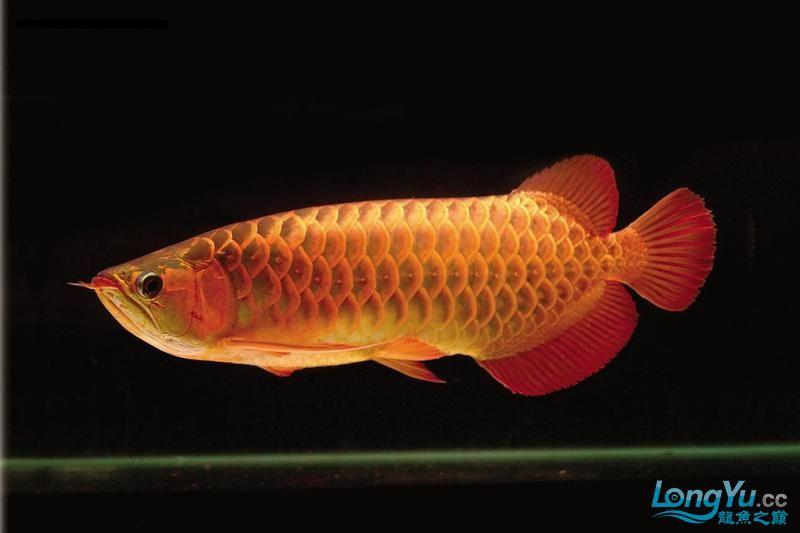 它们如此的美丽,如此迷人!(怕中毒者勿入) 西安观赏鱼信息 西安博特第12张