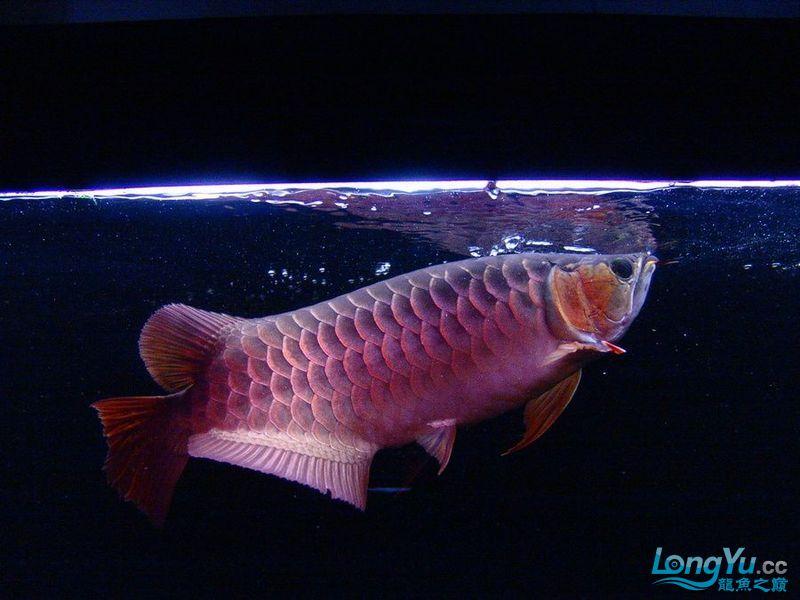 它们如此的美丽,如此迷人!(怕中毒者勿入) 西安观赏鱼信息 西安博特第11张