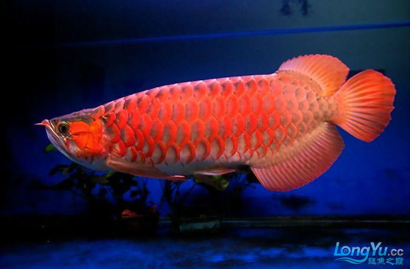 它们如此的美丽,如此迷人!(怕中毒者勿入) 西安观赏鱼信息 西安博特第16张