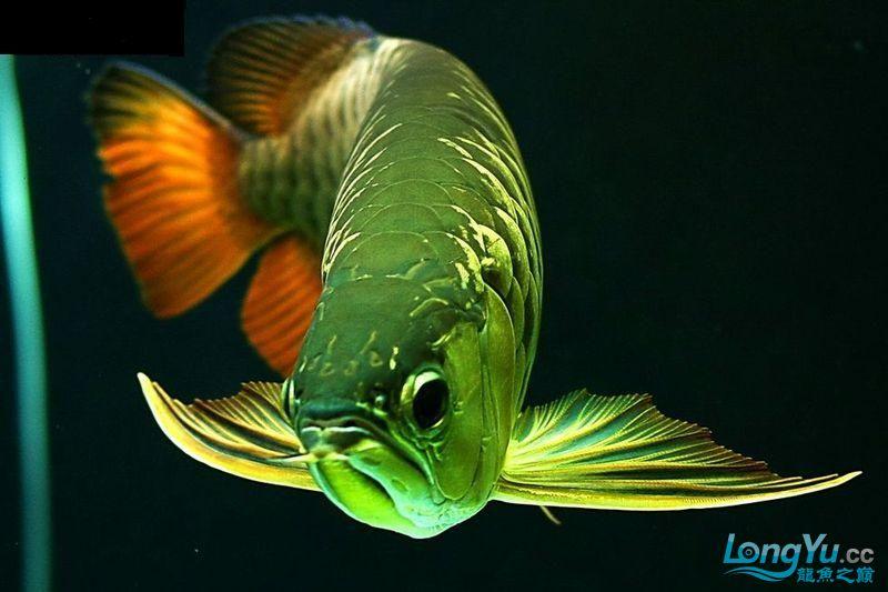 它们如此的美丽,如此迷人!(怕中毒者勿入) 西安观赏鱼信息 西安博特第15张