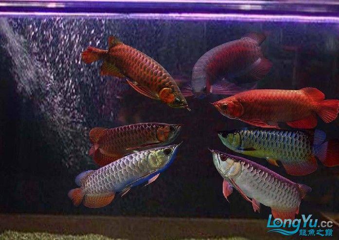 它们如此的美丽,如此迷人!(怕中毒者勿入) 西安观赏鱼信息 西安博特第19张