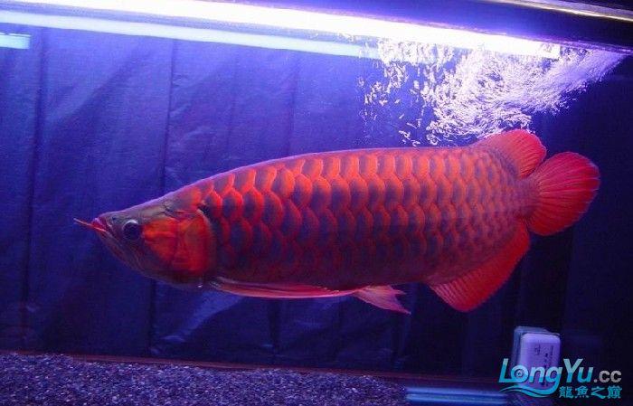 它们如此的美丽,如此迷人!(怕中毒者勿入) 西安观赏鱼信息 西安博特第20张