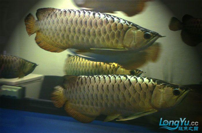 它们如此的美丽,如此迷人!(怕中毒者勿入) 西安观赏鱼信息 西安博特第22张