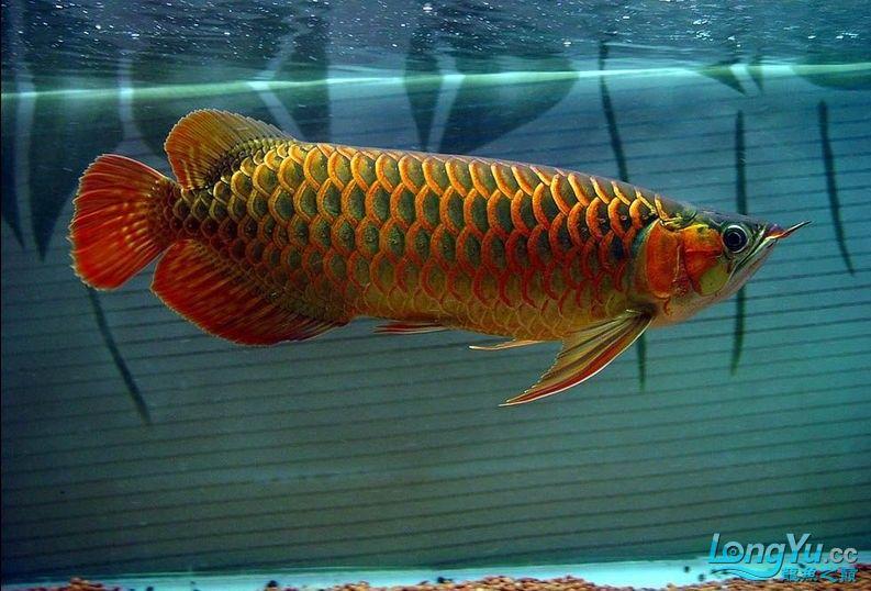 它们如此的美丽,如此迷人!(怕中毒者勿入) 西安观赏鱼信息 西安博特第23张