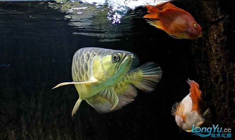 它们如此的美丽,如此迷人!(怕中毒者勿入) 西安观赏鱼信息 西安博特第24张